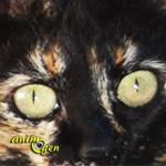 Les sens chez les chats : la vue