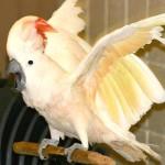 Trouble du comportement chez le perroquet : identifier et analyser les causes (méthode)