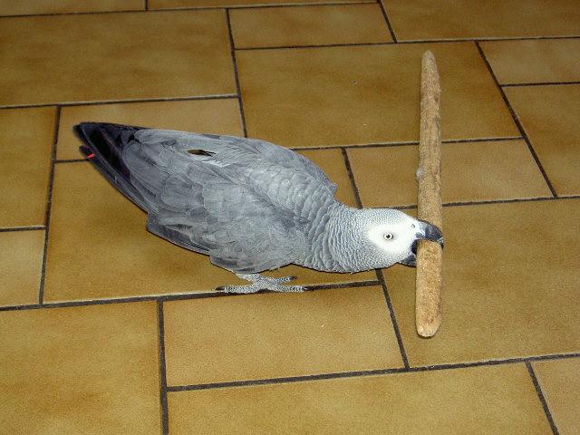 Les dangers de la maison pour le perroquet 1 re partie for Objets domotiques dans une maison