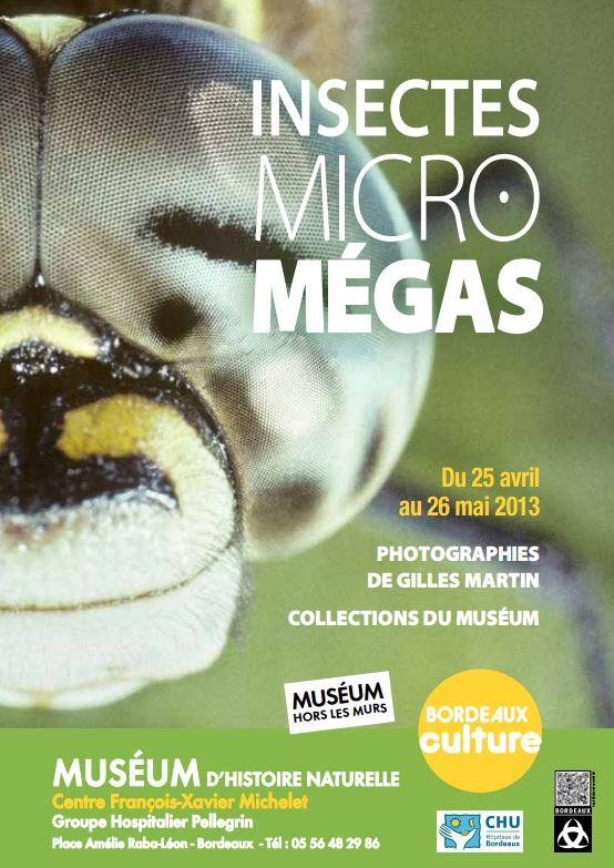 """Exposition """" Insectes Micro Megas """" à Bordeaux (33), jusqu'au 26 mai 2013"""