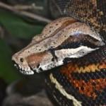 Exposition de serpents au Muséum d'Histoire Naturelle de Tours (37), du samedi 18 mai 2013 au dimanche 06 avril 2014