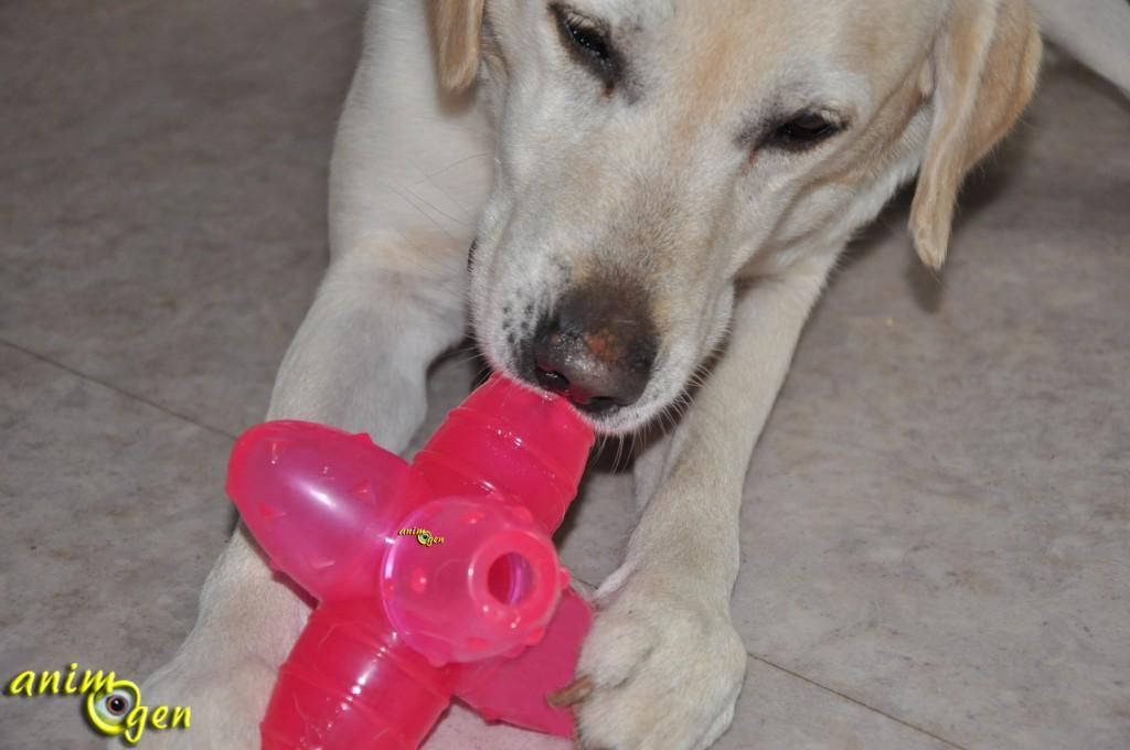 Jouet pour chien : Orka Jack (Petstages)