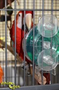Jeu pour grand perroquet : roue à fourrager géante (Creative Foraging Systems)