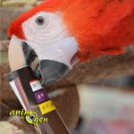 Jeux pour perroquets : idées de base pour occuper les becs à fourrager
