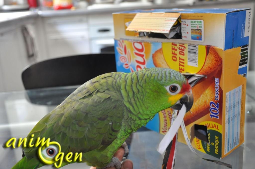 La boîte à trésors, un jouet pour perroquet à fabriquer à l'heure du petit déjeuner