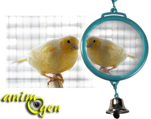 Accessoire : les miroirs conviennent-ils aux canaris, mandarins, et autres oiseaux à bec droit ?