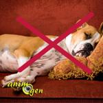 Education canine : liste des prérogatives de dominance (règles et utilité)