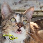 Le miaulement chez les chats (contextes, causes, et solutions)