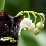 Le muguet, une plante toxique pour nos animaux de compagnie