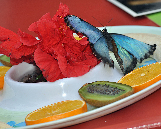 Comment attirer des papillons dans notre jardin le - Comment attirer des oiseaux dans son jardin ...