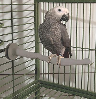 Les perchoirs de nos perroquets : utilité, choix et emplacement