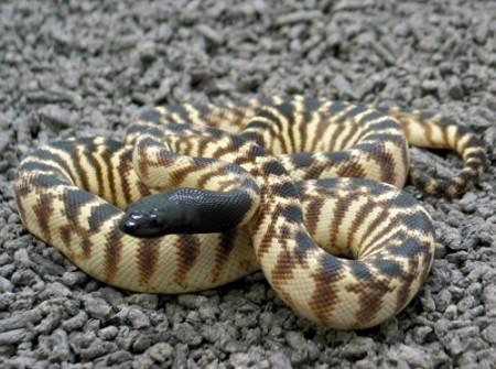 bottin des animaux des personnages Reptiles-d%C3%A9tention-conseils-implications-risques-pr%C3%A9cautions-animal-animaux-compagnie-animogen-2