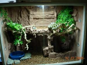 Les reptiles comme animaux de compagnie (implications,risques, précautions)