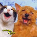 Chien ou chat, lequel nous fait le plus rire ?