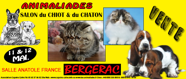 animaliades salon du chiot et du chaton bergerac 24 du samedi 11 au dimanche 12 mai. Black Bedroom Furniture Sets. Home Design Ideas