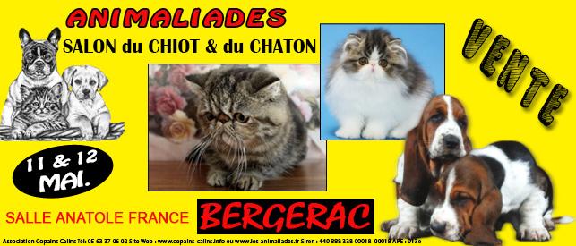 """ Animaliades, Salon du chiot et du Chaton "" à Bergerac (21), du samedi 11 au dimanche 12 mai 2013"