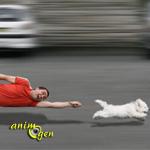 Education canine : comment apprendre la marche au pied en laisse à votre chien ?