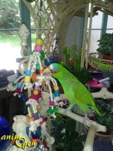 Barrels of fun (Nobby), un jouet à suspendre pour nos perroquets