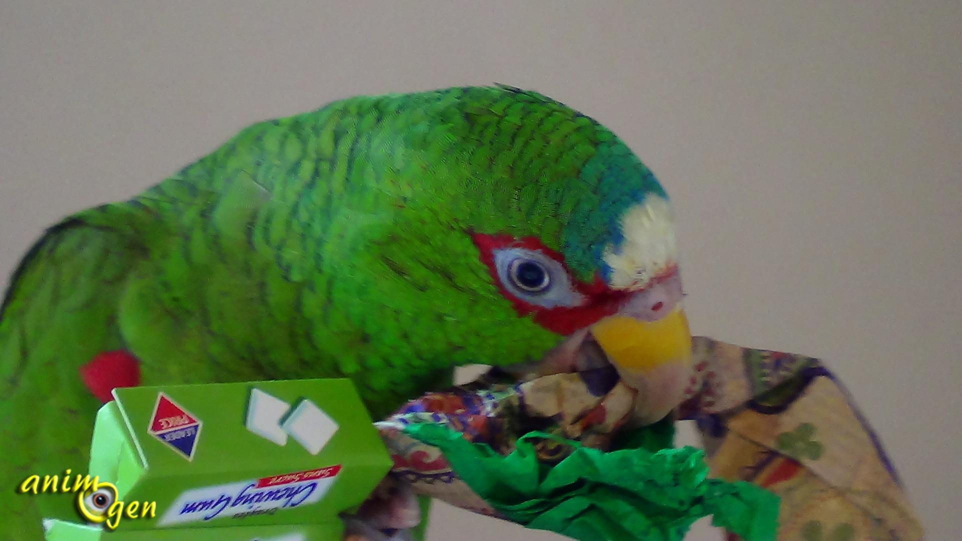 Manger des oiseaux jouets