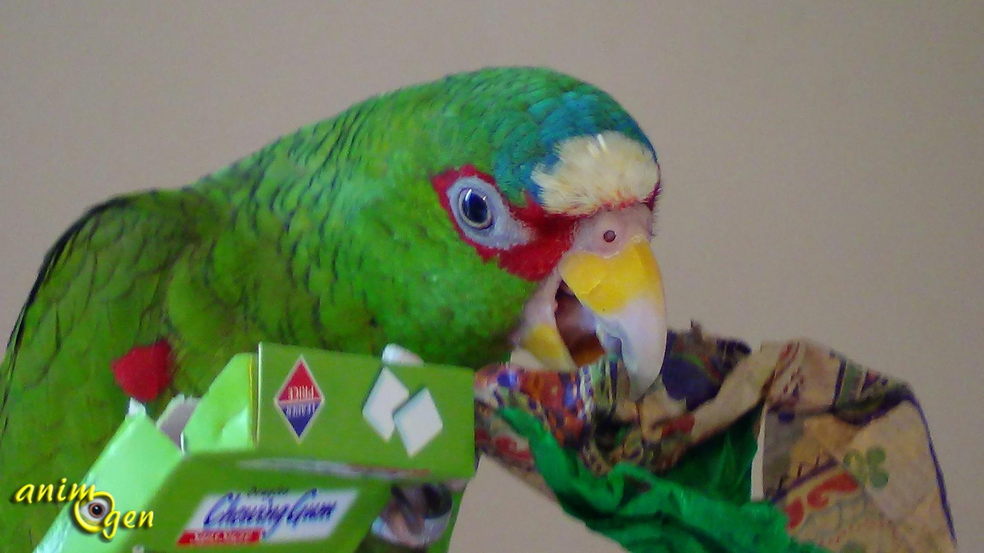 Acheter oiseaux domestiques en ligne Walmart Canada