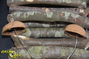 Accessoire pour rongeurs à fabriquer soi-même : le pont de bois suspendu