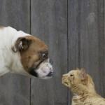 Comportement : pourquoi les chiens poursuivent-ils les chats ?