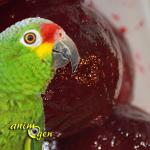 La betterave, un légume énergétique pour nos perroquets