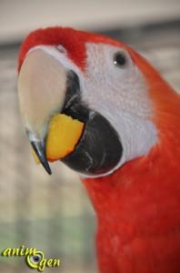 alimentation-nectarine-jaune-fruit-vitamines-apport-aliment-autorisé-perroquet-oiseau-psittacidé-animal-animaux-compagnie-animogen-7