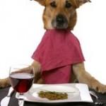 L'alimentation industrielle du chiot et du chien : que choisir, pourquoi, comment ?