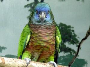 Les Amazones et la vie en communauté : les différences de mode de vie chez les nombreuses espèces du genre ?