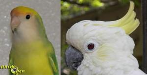 Santé : quand faut-il limer le bec de nos perroquets ?