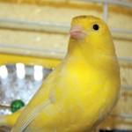 Bourse aux oiseaux à Boinville le Gaillard (78), samedi 08 juin 2013