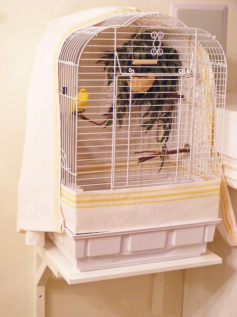 accessoire comment choisir la cage id ale pour nos canaris et petits oiseaux exotiques. Black Bedroom Furniture Sets. Home Design Ideas