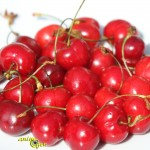 Alimentation perroquets : la cerise, un fruit riche en Béta carotène