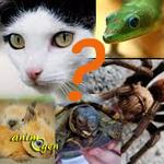 Qu'est-ce-qui nous pousse à adopter une espèce animale plutôt qu'une autre ?