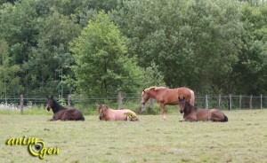L'instinct grégaire chez le cheval : des signes à reconnaître
