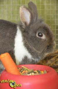 """Alimentation pour lapin : """"Crispy Muesli Rabbits"""" (Versele Laga)"""