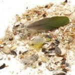Comment protéger les abords de la cage des salissures occasionnées par nos perroquets