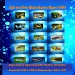 Exposition aquariophile et Concours Wingeis France à Hautes-Vignes (47), samedi 22 et dimanche 23 juin 2013