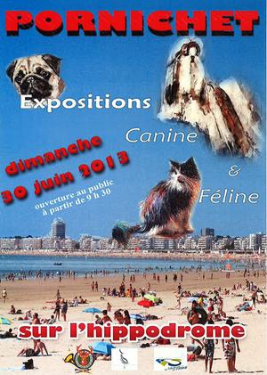 Exposition canine et féline à Pornichet (44), le dimanche 30 juin 2013