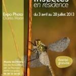 """Exposition de photos Charles Martin, """"Insectes en résidence"""" à Carquefou (44), du mercredi 03 avril au vendredi 28 juillet 2013"""
