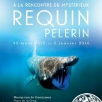 """Exposition """"A la rencontre du mystérieux requin pélerin"""", à Concarneau (29), du 30 mars 2013 au 05 janvier 2014"""