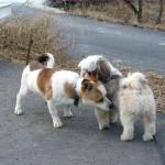 Santé : la gestation chez la chienne symptômes et déroulement
