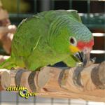 Accessoire à fabriquer pour nos perroquets : échelle en bois et montants métalliques