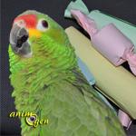 Jouet pour perroquets à fabriquer soi-même : le ballotin à trésors