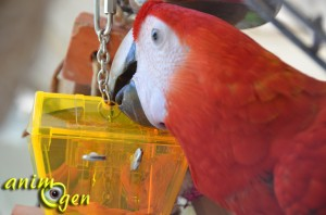 """Jouet d'intelligence pour perroquet : le coffre aux trésors """"Parrot's Treasure"""", Foragewise (Nature's Instinct)"""