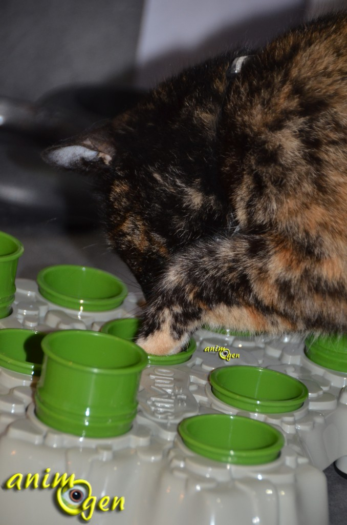 Jeu d'intelligence et foraging pour chat : Stimulo (Aïkioli)