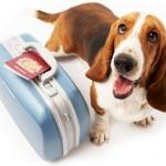 Législation : voyager en Europe avec un animal de compagnie sera plus simple en 2014