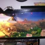 Accessoires : l'importance de l'éclairage dans un terrarium pour reptiles
