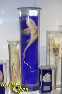 Les splendeurs marines du musée océanographique de Monaco